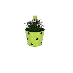 TrustBasket Single Pot Railing Planter - Green With Dots