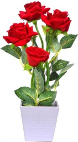 Naturo Bonsai Imported Red Rose Plant Seed