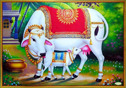 PAPER PLANE DESIGN Hindu Religious Kamdhenu Cow with Calf Unframed Wall Poster (Paper, 12 x 18 inch, Multicolour), multicolor