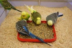 Bird Food for All Birds by Money Saving-500g